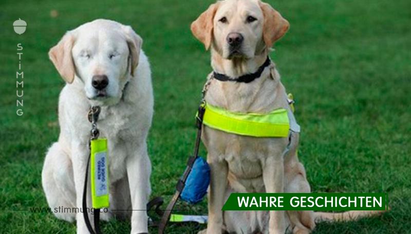 Sein lieber Hund war blind und er wurde angeboten, sie zu ersetzen, aber er hat seinen Freund nicht verraten ...