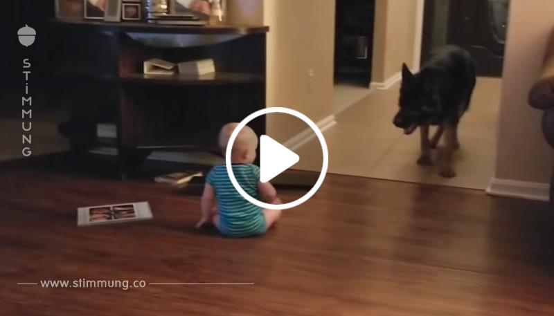 Das Baby krabbelt langsam am Boden – was der Hund dann macht, ist einfach zu süß!