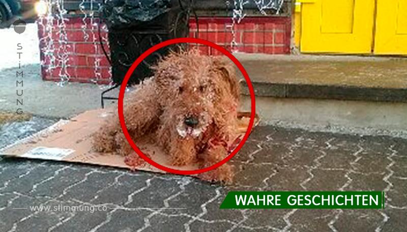 Da war ein Hund auf der Straße, er war ganz im Blut und die Leute gingen gleichgültig ...