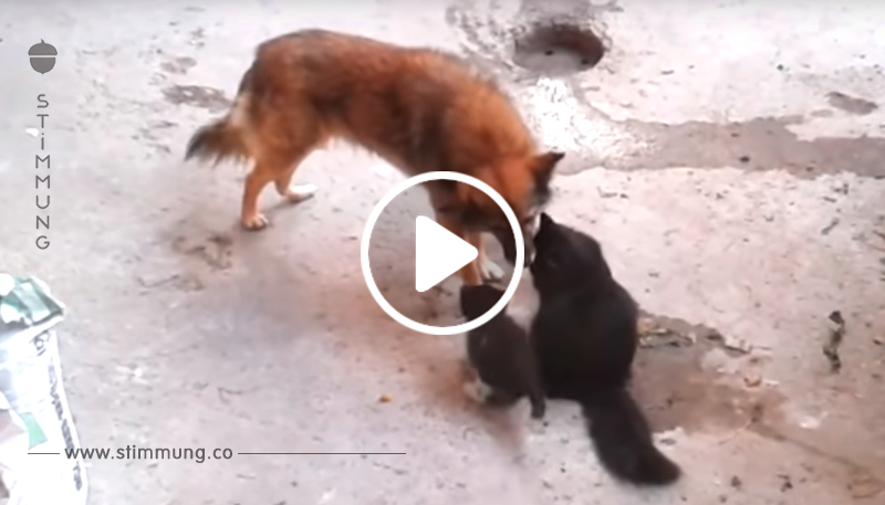 Die Katzenmama und ihre Jungen treffen auf den Hund. Doch was dann passiert, lässt alle...