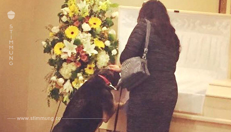 Hungernder Hund beginnt nach Beerdigung wieder mit Essen.