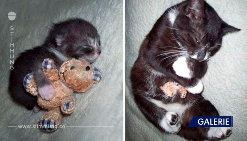 Tiere mit ihren Lieblingsspielzeugen   vor und nach dem Aufwachsen!