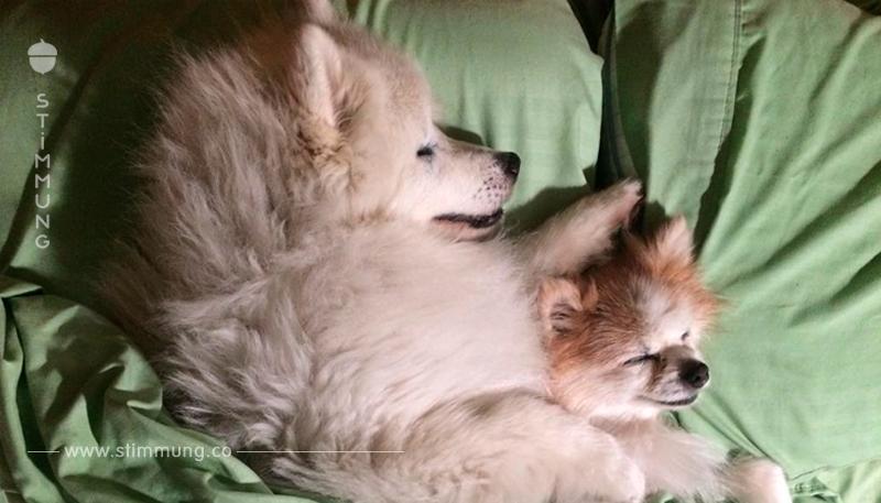 Dem Schlittenhund müssen die Augen entfernt werden. 6 Monate vor der Operation begegnet ihm jemand, der sein Leben verändern wird.