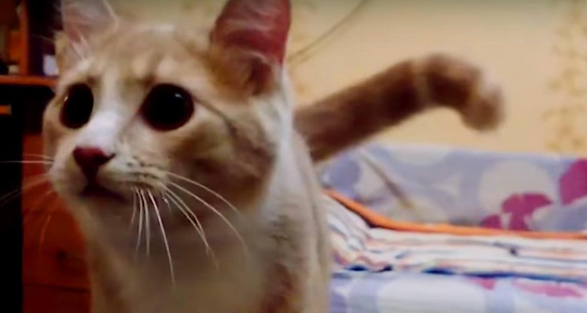 Die Katze namens Peach ist sicher, dass sie ein strenger Hund ist. Schau dir nur an, was diese Katze macht!