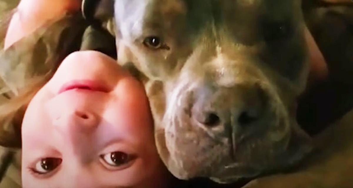 Pitbull ist nur in seine kleine Herrin verliebt. Schau sie dir einfach an!