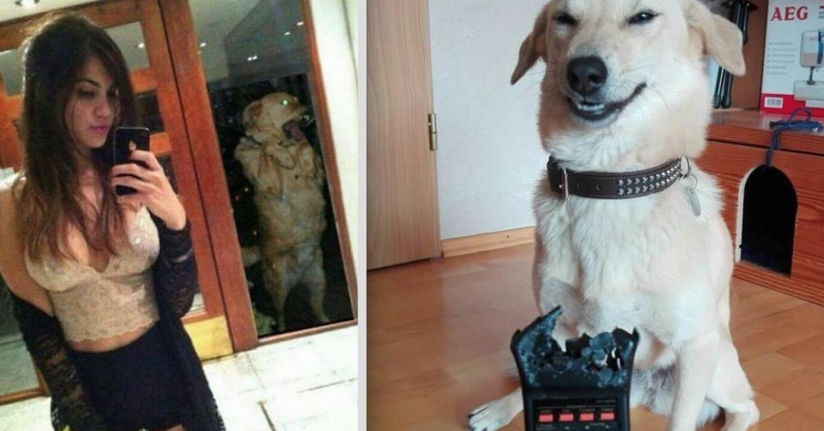 berichter folter mit hunden