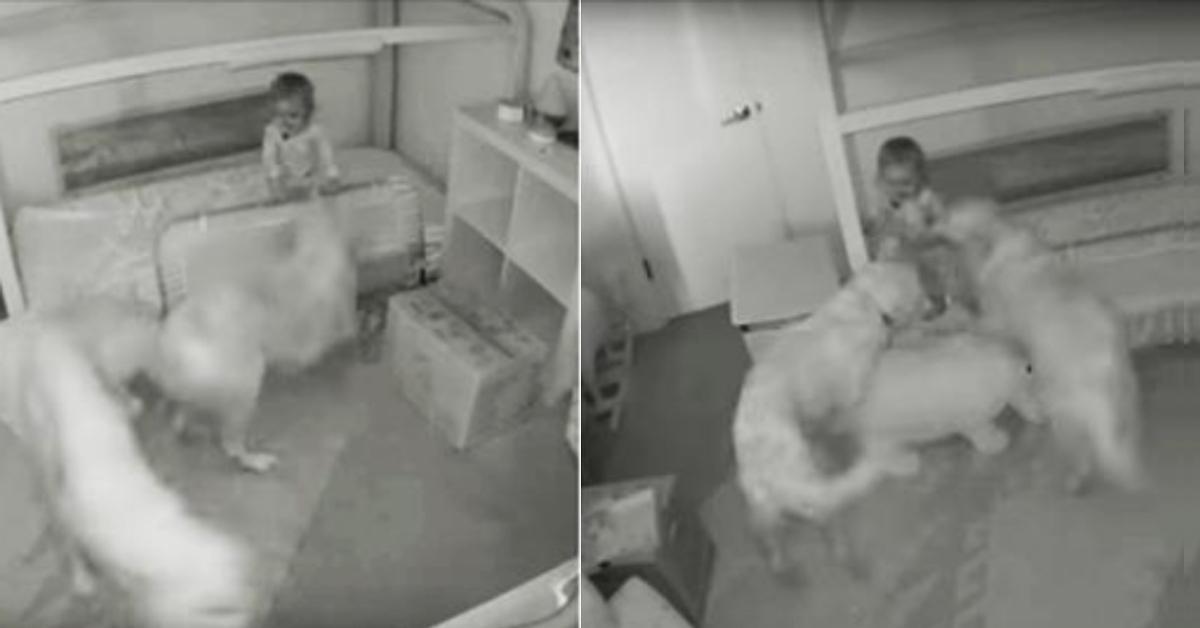 Video: Hunde befreien Kleinkind aus Zimmer.
