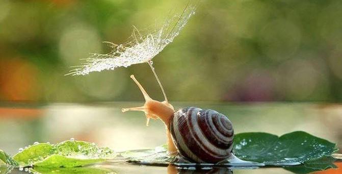 Magische Miniaturwelt der Schnecken von Vyacheslav Mishchenko!