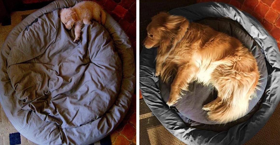 22 Bilder von Hunden vor und nach dem Aufwachsen!