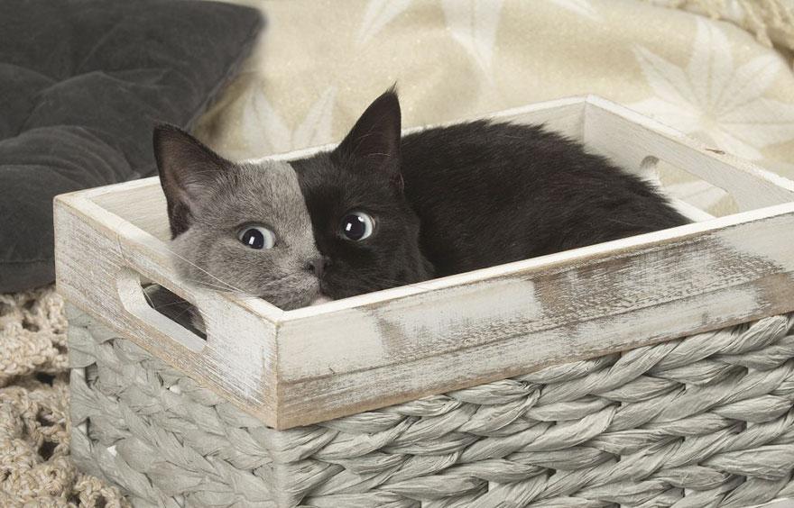 Seltenes Kätzchen mit