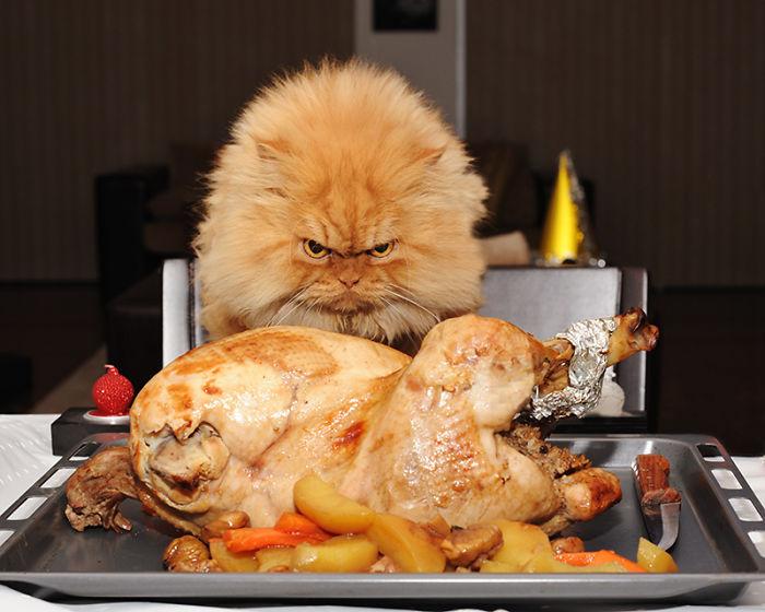 Treffe Garfield! Die böseste Katze der Welt!