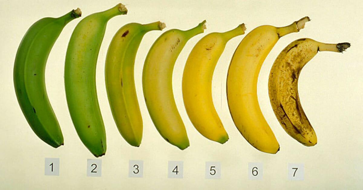 Zu welcher Banane würdet ihr greifen? Die Wahl der Farbe hat großen Einfluss auf eure Gesundheit