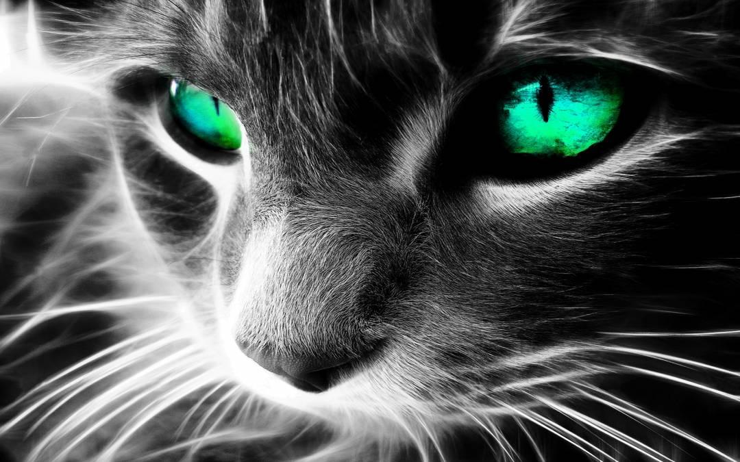 Die Katze ist der beste Schutz des Hauses vor bösen Geistern und bösen Augen!
