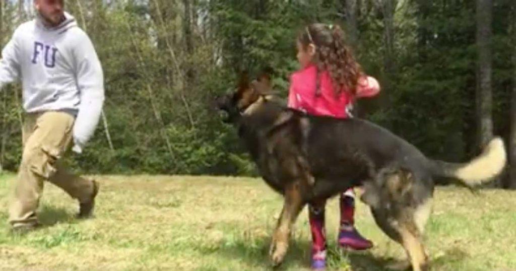 5 Jahre altes Mädchen sagt dem deutschen Schäferhund, den Angreifer zu attackieren – was er auch macht
