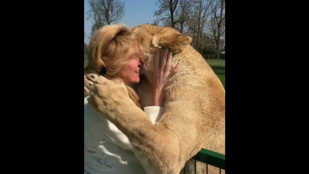 Sie musste 2 adoptierte Löwenbabys aufgeben – 7 Jahre später sehen sie sich endlich wieder