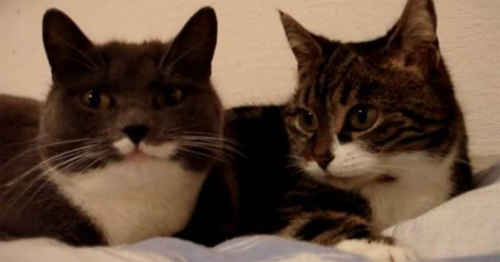 Die Katzen sitzen nebeneinander auf dem Bett – was sie dann tun, bringt Millionen zum Lachen!