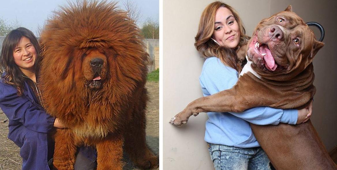 20 Hunde, die nicht verstehen, wie groß sie gewachsen sind!