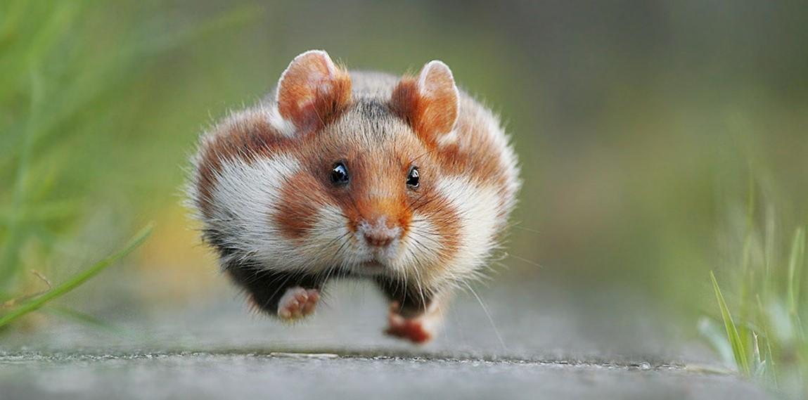 13 lustige Bilder von Tieren im Jahr 2015!