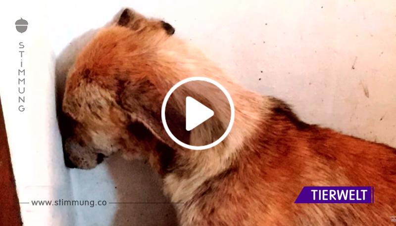 Sie wurde aus dem Tierheim geholt, aber sie saß den ganzen Tag in einer Ecke versteckt, bis die Besitzer eine Entscheidung trafen!