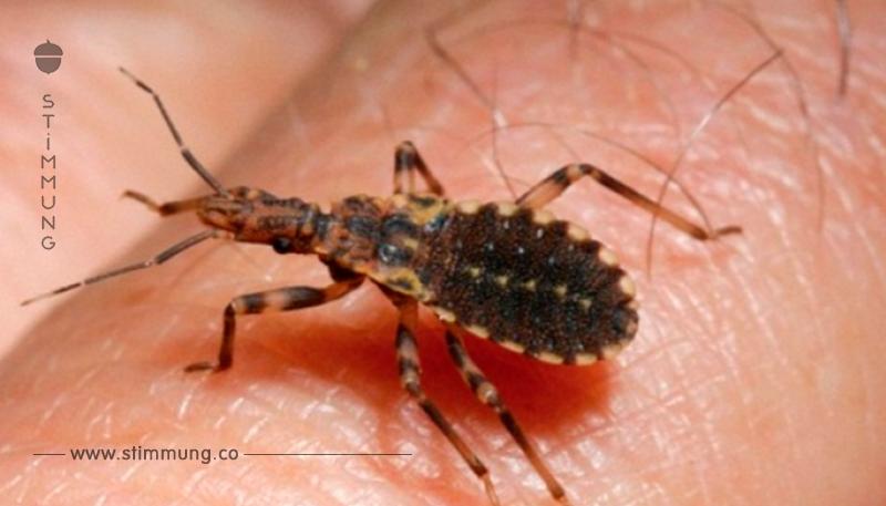 Dieses Insekt taucht zur Zeit überall auf. Nimm besser die Beine in die Hand, wenn du es siehst, denn dies hier ist der Grund…