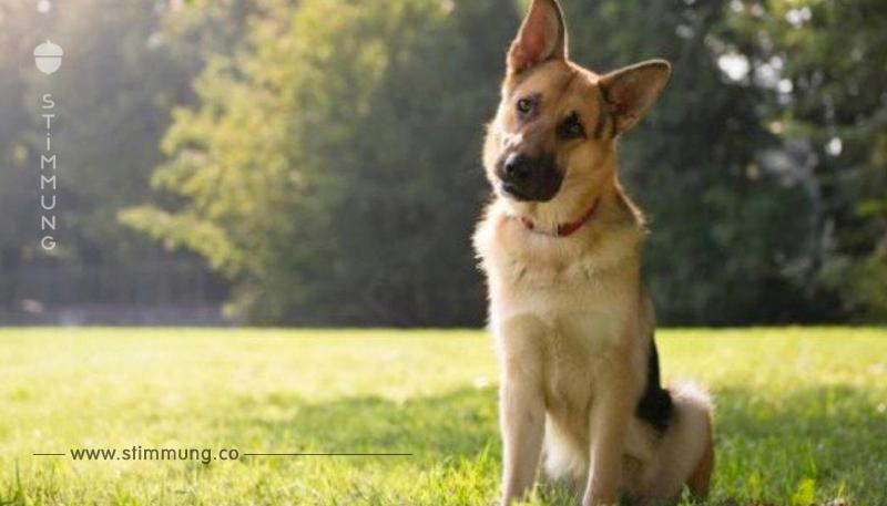 Warum dein Hund den Kopf schräg legt, wenn du mit ihm sprichst, ist so überraschend wie komisch.