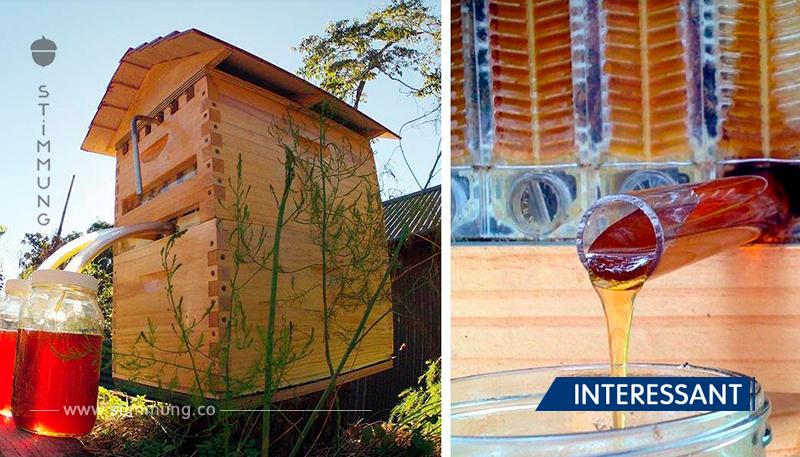 Neue Bienenstöcke sammeln automatisch Honig, um die Bienen nicht zu stören!