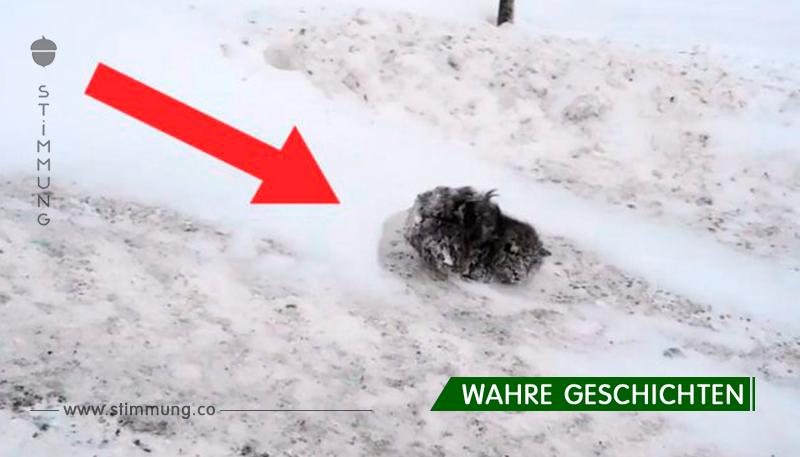 Leute gingen um diesen gefrorenen Wollknäuel herum. Aber ein Mann konnte nicht gleichgültig vorbeigehen ...