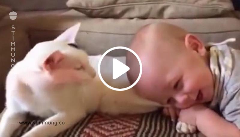 Das Baby zieht an den Hinterbeinen der Katze. Aber was die Mutter daraufhin filmt, geht wie ein Lauffeuer durchs Internet.