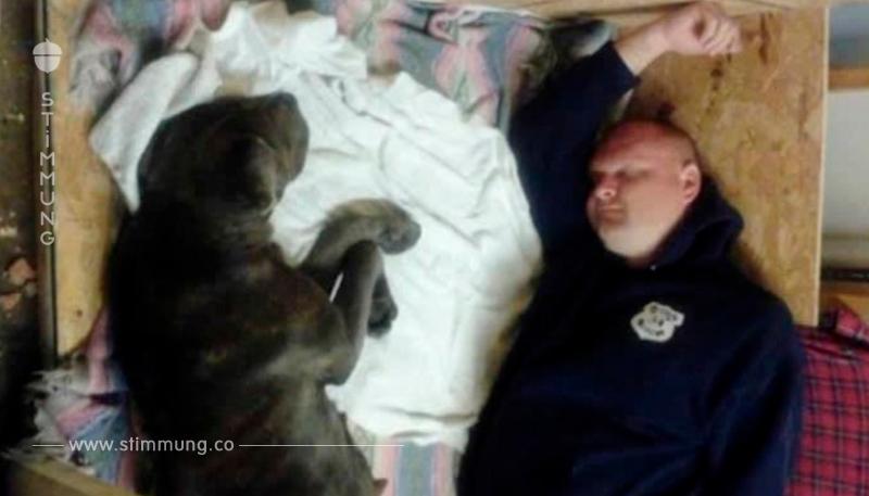 Hund mit Steinen beworfen und mit Gürtel gepeitscht – Polizist rettet ihn in letzter Sekunde