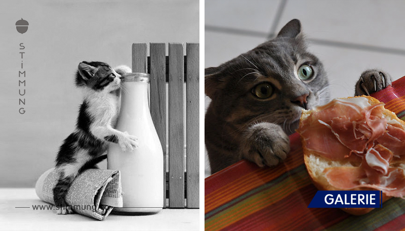 Katzen-Diebe, die auf frischer Tat erwischt worden sind!