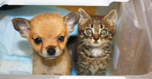 Der Welpe und das Kätzchen retteten sich gegenseitig das Leben. Man kann es ohne Trännen nicht anschauen