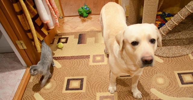 Die Besitzer haben den Hund mit der Katze allein zu Hause gelassen. Als sie zurückkamen, waren sie überrascht. Umora!