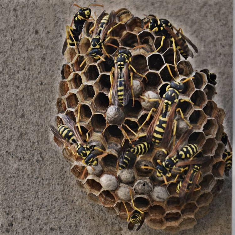 10 insektenstiche die du erkennen solltest. Black Bedroom Furniture Sets. Home Design Ideas