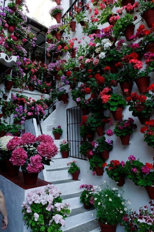Die schönsten Häuser mit Blumen. Es ist großartig!