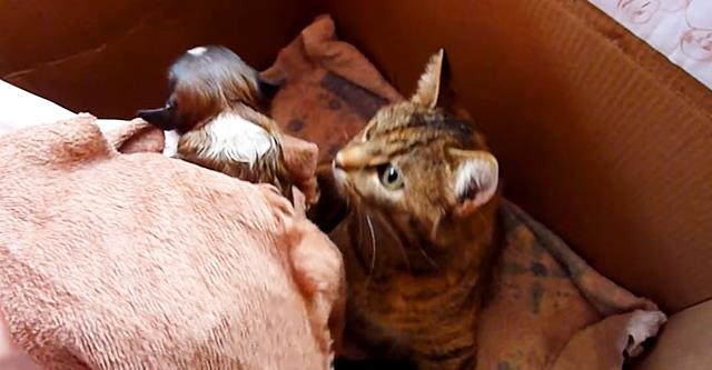 Sie brachten den Welpen der Mutterkatze und ihren Kätzchen. Achte jetzt auf ihre Reaktion!