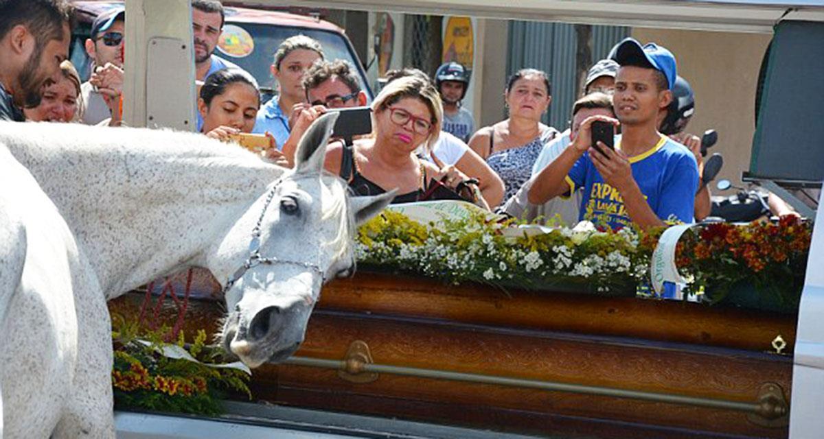 Das Pferd kam, um sich vom Besitzer zu verabschieden. Als das Tier sich zum Sarg beugte, begannen Tränen zu fließen ... So traurig