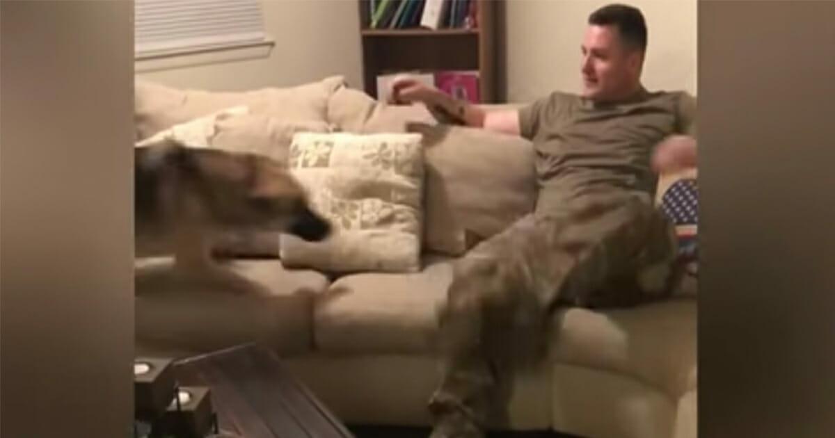 Hund denkt, sie wurde vor 9 Monaten verlassen – sieh dir jetzt die emotionale Begegnung an