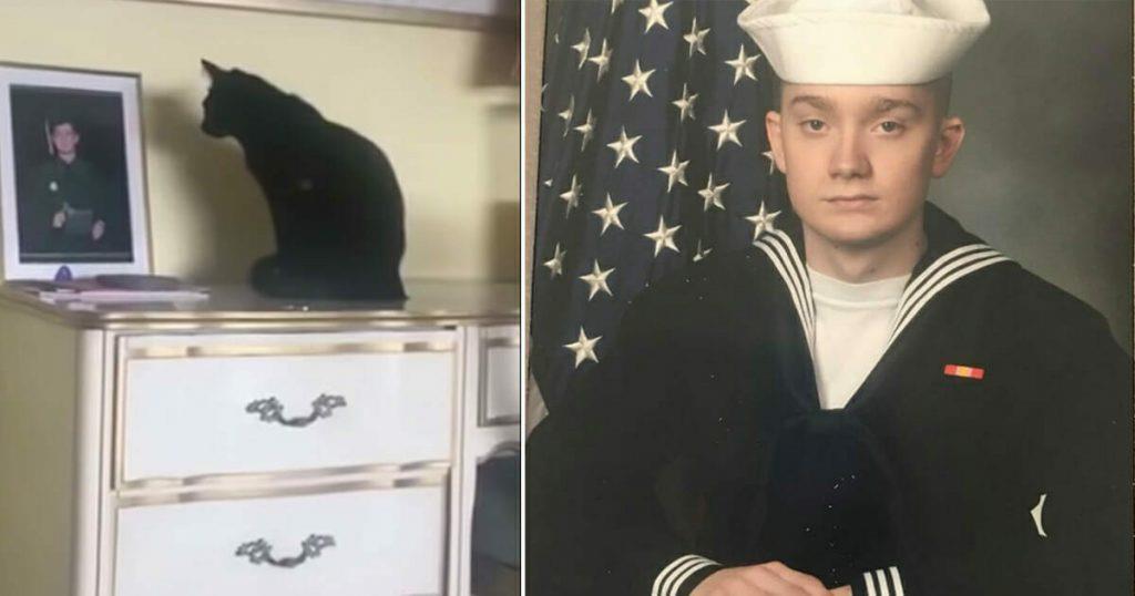 Jeden Tag starrt die Katze auf das Foto des jüngsten Sohnes, aber dann entdeckt die Mutter die Wahrheit