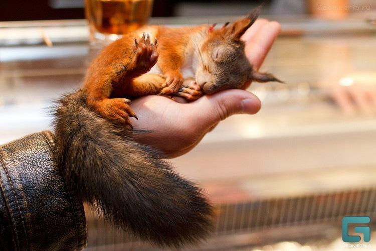 Eichhörnchen-Taxifahrer: Die Geschichte der fantastischen Freundschaft des belarussischen Fallschirmjägers und eines kleinen Eichhörnchens.