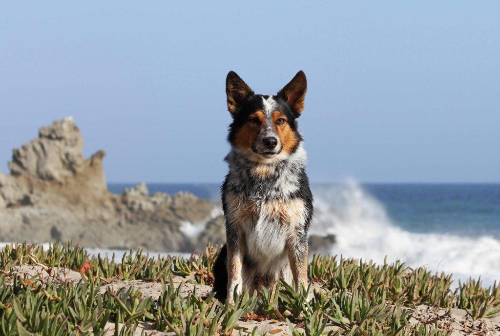 Dies ist der intelligenteste Hund der Welt - diesen Titel hat er wirklich verdient. Schau nur, was er macht!