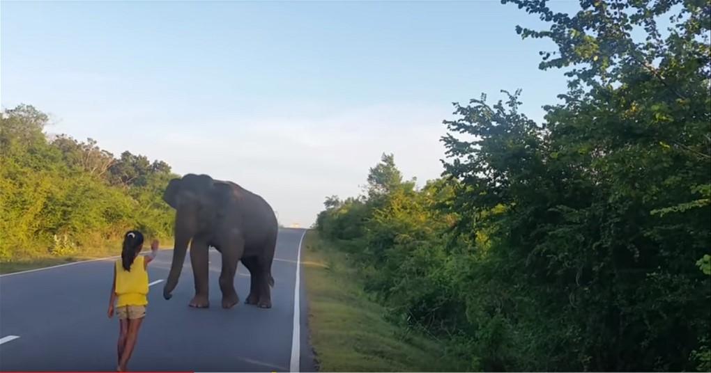 Ein kleines Mädchen steuert gekonnt einen wilden Elefanten!