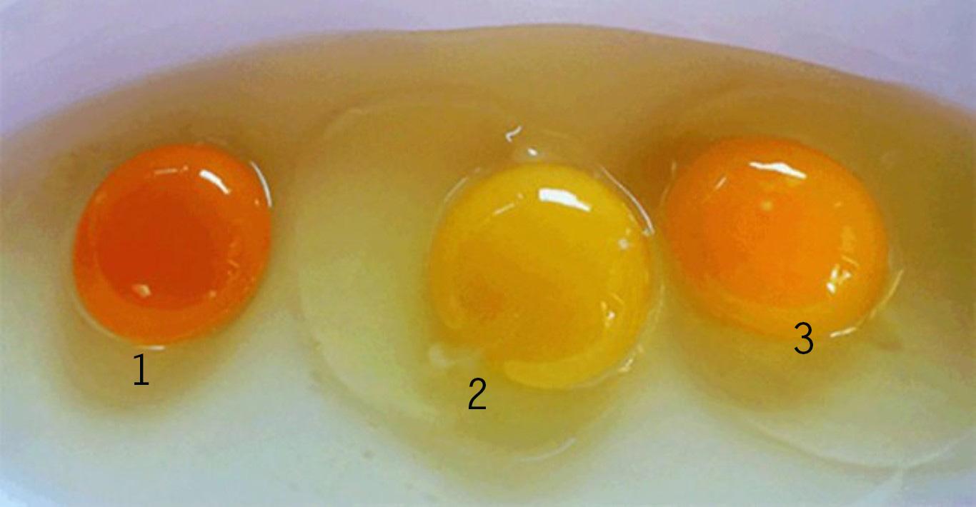Kannst du raten, welches Eigelb von einem gesunden Huhn stammt? Die Antwort ist überraschend!