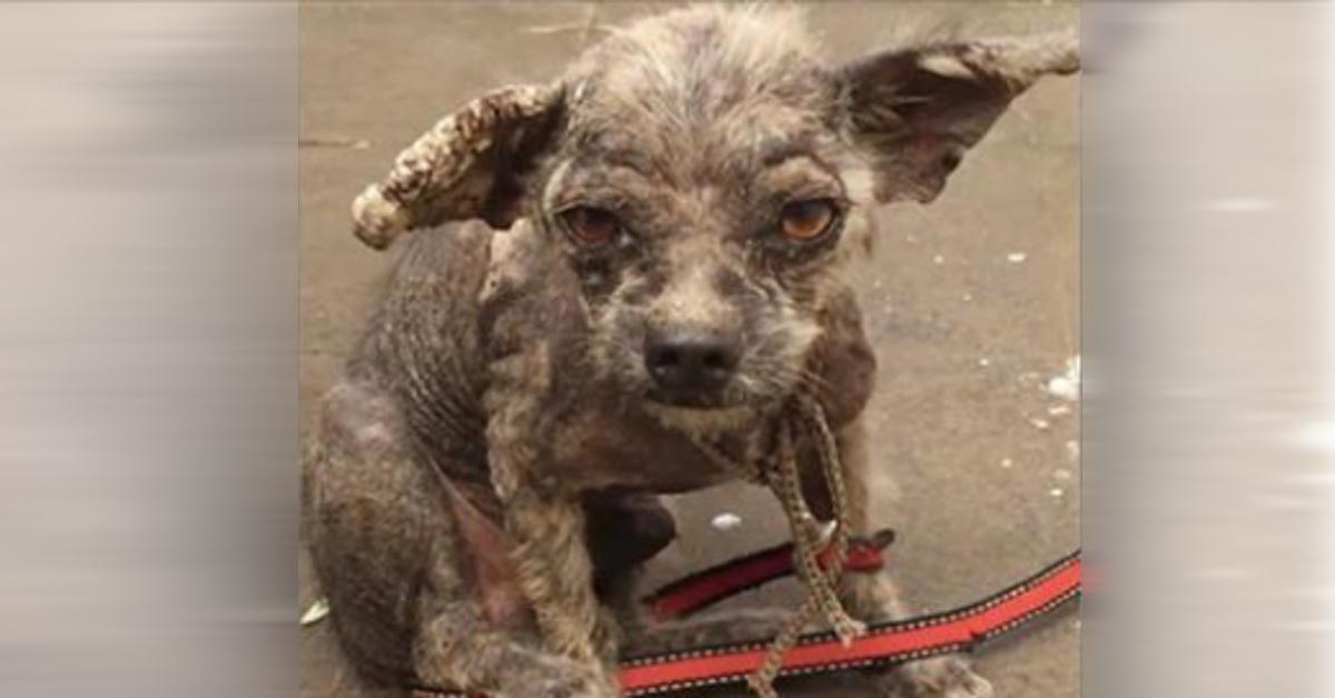 Frau pflegt vom Tierarzt aufgegebenen Hund gesund.