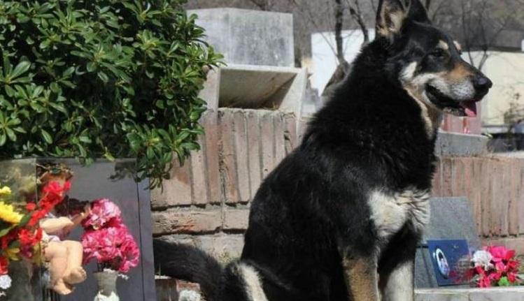 Diesen Hund und seinen Besitzer hat sogar der Tod nicht getrennt. Seit 10 Jahren lebt er auf dem Grab seines Besitzers ...