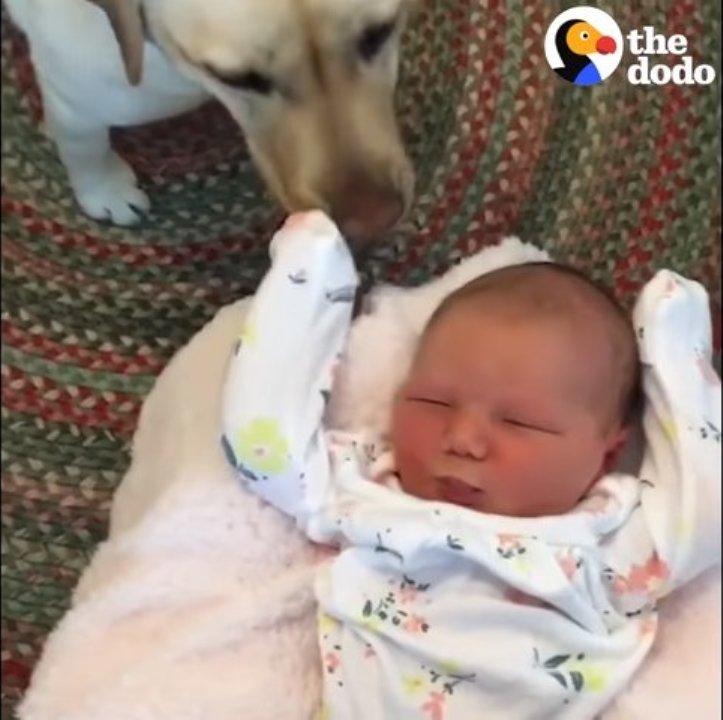 Schau wie die kleinen Hunde die Kinder kennenlernen!