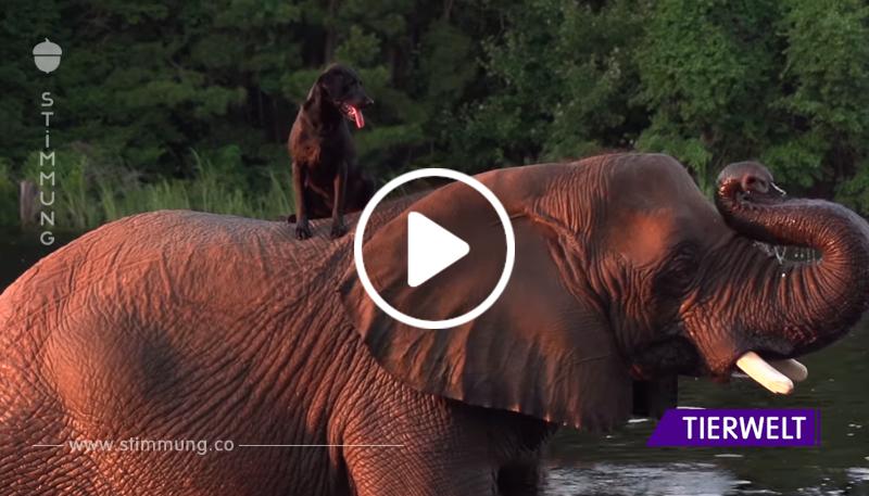 Ein riesiger Elefant wurde mit einem kleinen Welpen alleine gelassen. Du wirst nicht glauben, was als nächstes passierte!