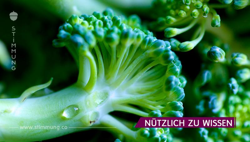Brokkoli befreit die Lunge von pathogenen Bakterien!