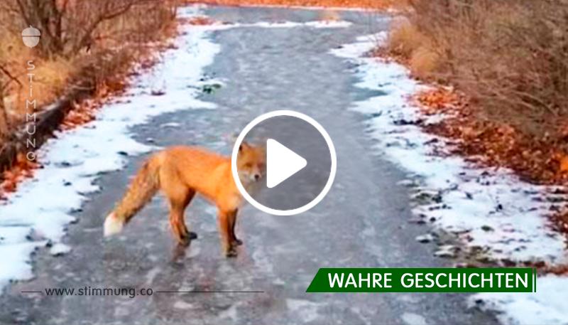 Er lief in Tschernobyl herum, als der Fuchs plötzlich auftauchte. Die Reaktion des Tieres ist fantastisch!