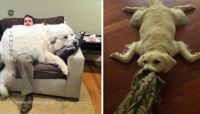 16 Hunde, die versuchen, andere Tiere zu sein.