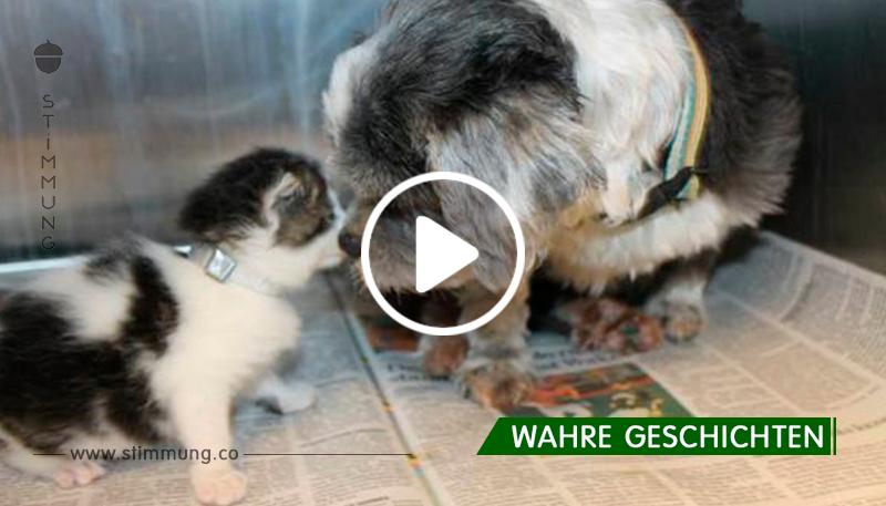 Der Hund hat ein kleines Kätzchen gerettet. Was als nächstes passierte, schockierte alle!